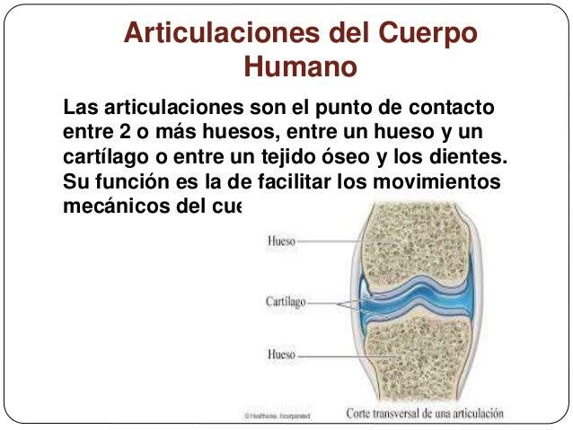 articulaciones del cuerpo humano 2 638