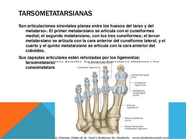 FRACTURA / LUXACIÓN DE LISFRANC Las lesiones de la articulación Tarsometatarsianas son raras. Las luxaciones se presentan ...