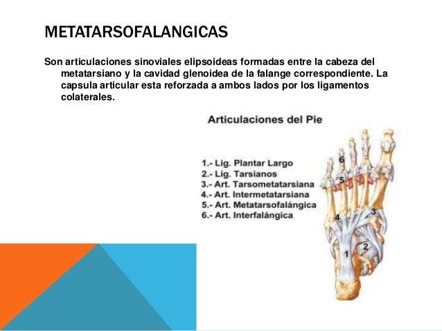 INTERFALANGICAS Son ginglimos. Sus capsulas están reforzadas a ambos lados por los ligamentos colaterales. Los ligamentos ...