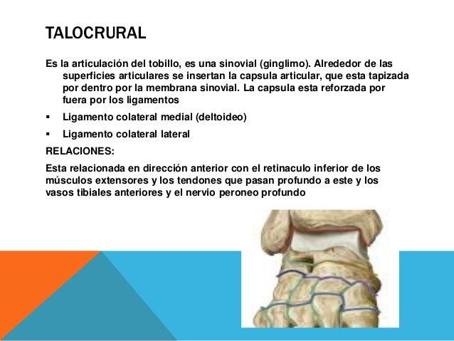 SUBTALAR Es una articulación sinovial (cilíndrica trocoide), formada entre la cara inferior del astrágalo y la cara superi...