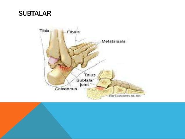 TRANSVERSA DEL TARSO Es la articulación ubicada entre los huesos calcáneo y astrágalo (proximales) y los huesos cuboides y...