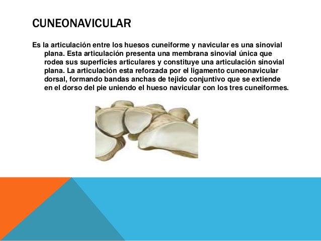 INTERCUNEIFORMES Son sinoviales planas, están reforzadas por ligamentos intercuneiformes interóseos que unes los huesos cu...