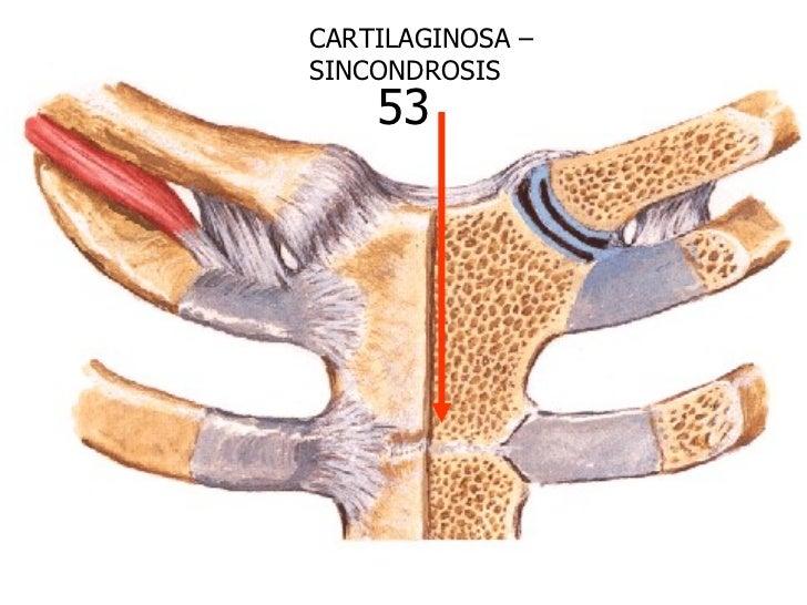 Clase N°2 Anatomia Humana