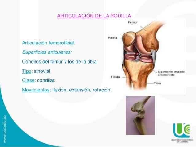 Artrología del Miembro Pelviano