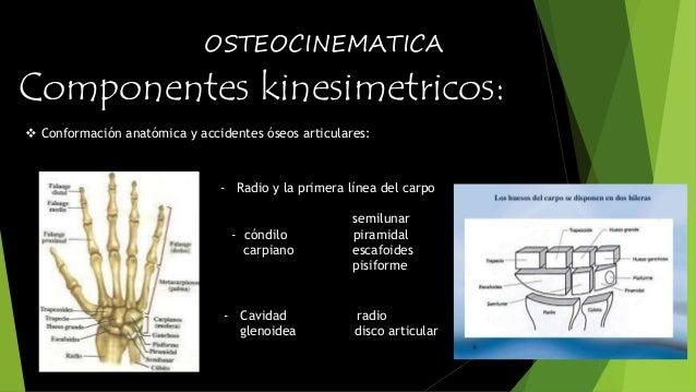 OSTEOCINEMATICA  Componentes kinesimetricos:   Conformación anatómica y accidentes óseos articulares:  - Radio y la prime...