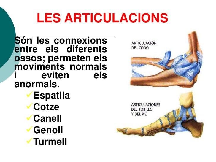 LES ARTICULACIONS Són les connexions entre els diferents ossos; permeten els moviments normals i    eviten     els anormal...