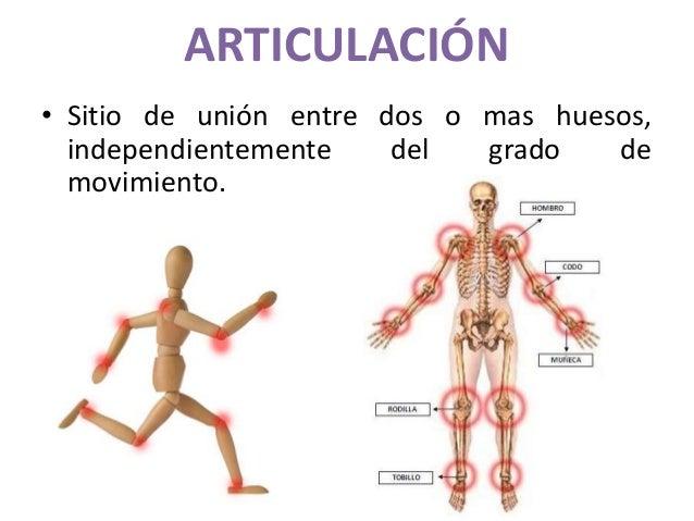 ARTICULACIÓN • Sitio de unión entre dos o mas huesos, independientemente del grado de movimiento.
