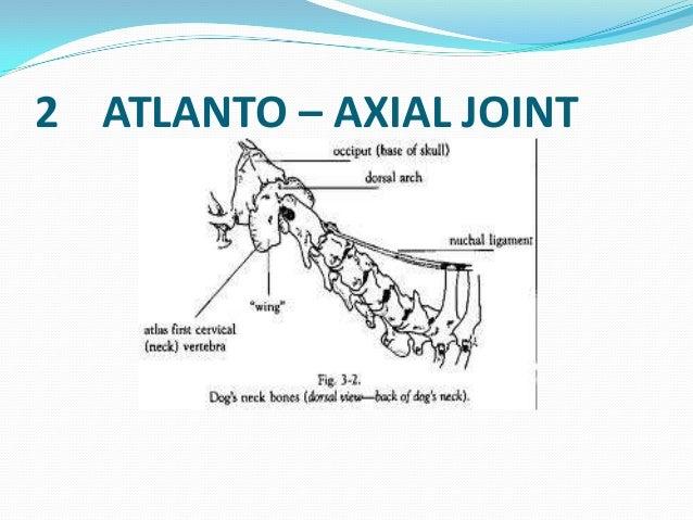Cervical vertebrae anatomy