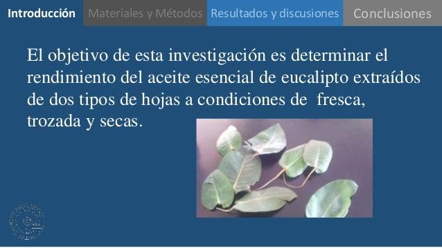 Presentaci n de efecto de dos tipos de hojas sobre el - Informacion sobre el eucalipto ...