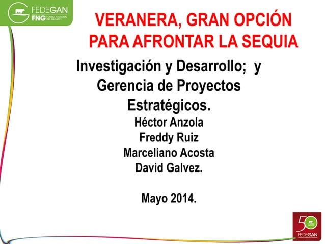 VERANERA, GRAN OPCIÓN PARA AFRONTAR LA SEQUIA Investigación y Desarrollo; y Gerencia de Proyectos Estratégicos. Héctor Anz...