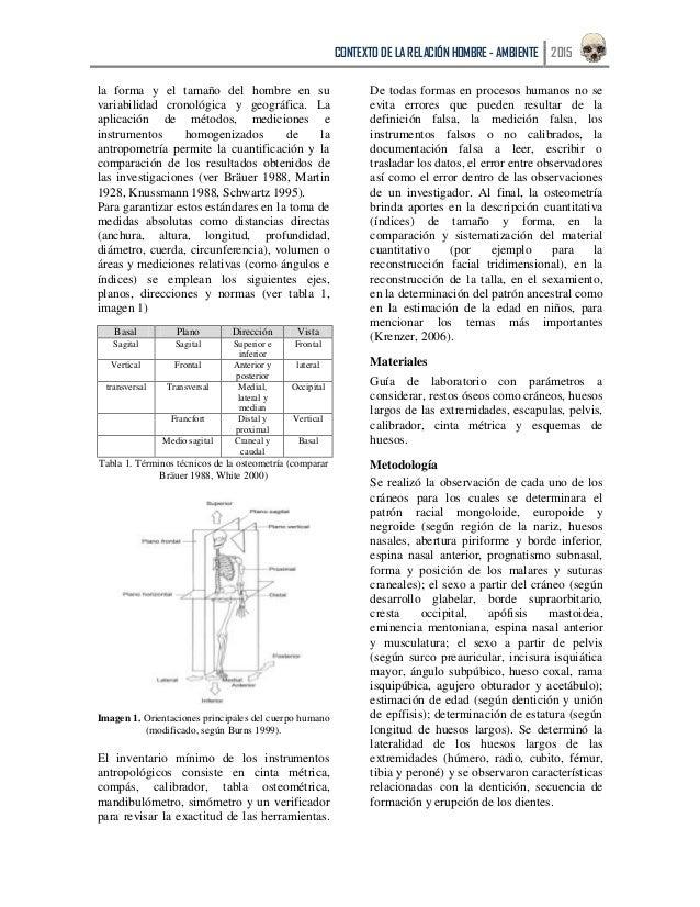 Bonito Tabla De Huesos Humanos Cresta - Anatomía de Las Imágenesdel ...