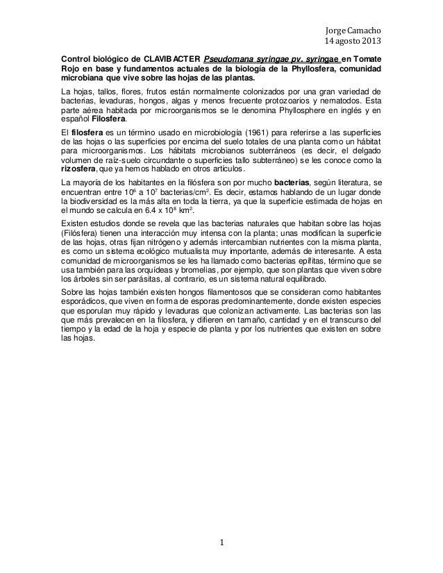 Jorge Camacho 14 agosto 2013 1 Control biológico de CLAVIBACTER Pseudomana syringae pv. syringae en Tomate Rojo en base y ...
