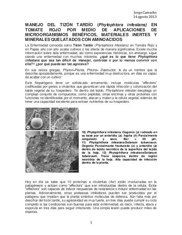 Jorge Camacho 14 agosto 2013 1 MANEJO DEL TIZÓN TARDÍO (Phytophtora infestans) EN TOMATE ROJO POR MEDIO DE APLICACIONES DE...