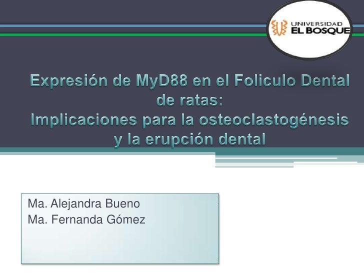 Expresión de MyD88 en el Foliculo Dental de ratas:Implicaciones para la osteoclastogénesis y la erupción dental<br />Ma. A...