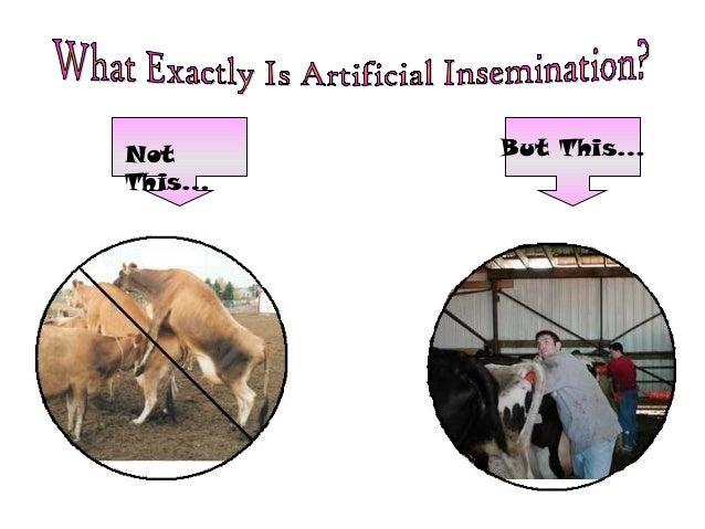 Essay/Term paper: Artificial insemination