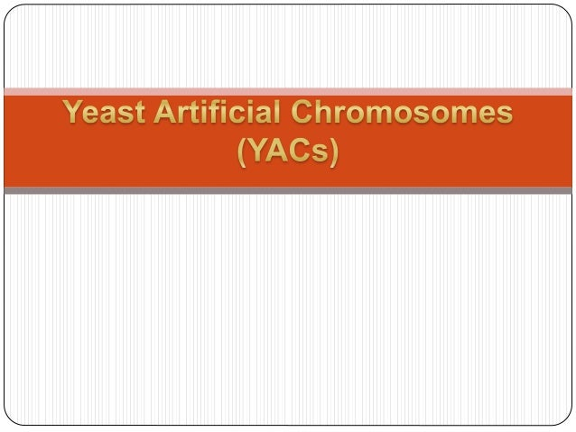 YACs are plasmid shuttle vectors capable of replicating and being selected in common bacterial hosts such as Escherichia c...