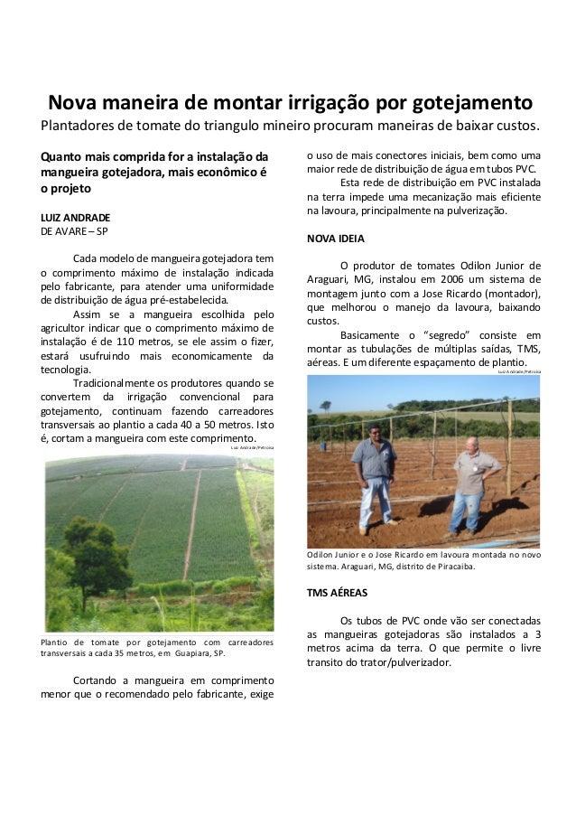 Nova maneira de montar irrigação por gotejamento Plantadores de tomate do triangulo mineiro procuram maneiras de baixar cu...