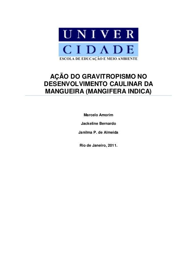 AÇÃO DO GRAVITROPISMO NO DESENVOLVIMENTO CAULINAR DA MANGUEIRA (MANGIFERA INDICA) Marcelo Amorim Jackeline Bernardo Janilm...