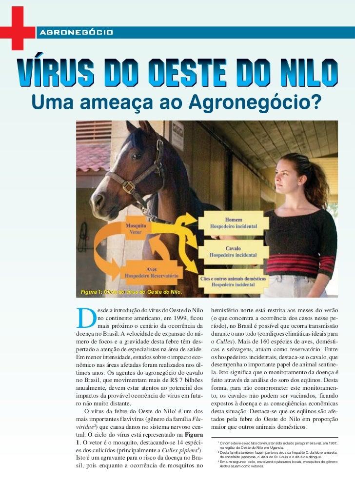 Artigo equina 8 nov-dez_2006