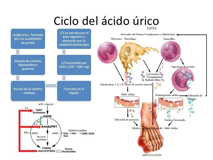 como se mide el acido urico en la orina acido urico relacion con las bases nitrogendas porque se da el acido urico