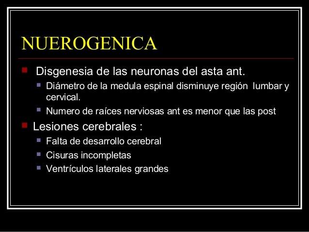 NUEROGENICA  Disgenesia de las neuronas del asta ant.  Diámetro de la medula espinal disminuye región lumbar y cervical....