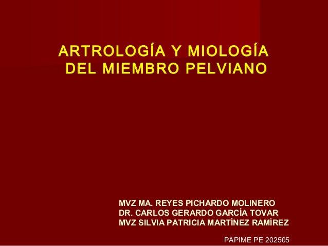 ARTROLOGÍA Y MIOLOGÍA DEL MIEMBRO PELVIANO      MVZ MA. REYES PICHARDO MOLINERO      DR. CARLOS GERARDO GARCÍA TOVAR      ...