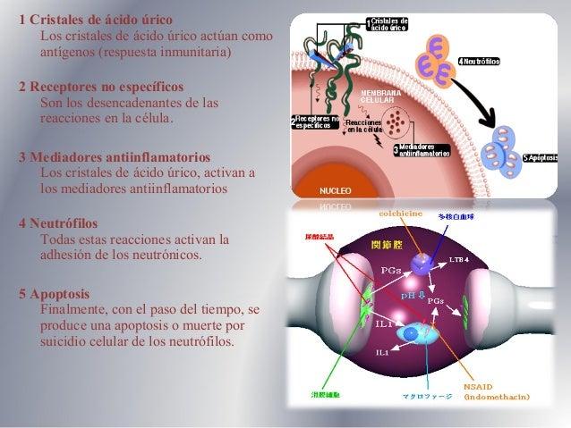 que remedio casero puedo tomar para el acido urico acido urico pdf 2012 recetas para controlar el acido urico