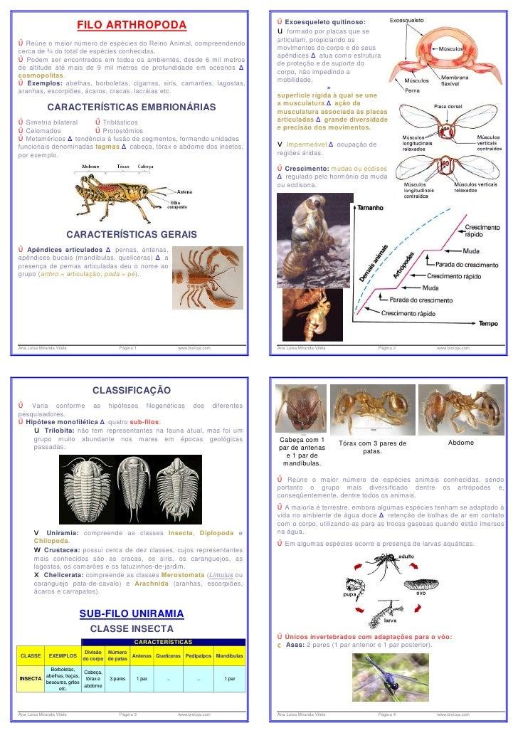 Artropodes