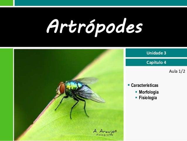 Aula 1/2  Unidade 3  Capítulo 4  Artrópodes   Características   Morfologia   Fisiologia