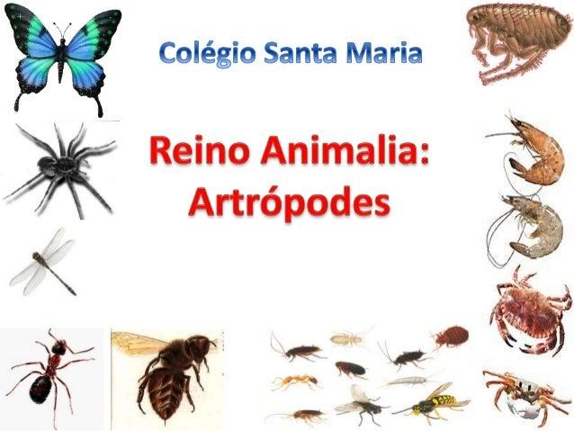 São animais invertebrados que possuem patas articuladas; Artrópodes é uma palavra que vem do grego, onde arthron significa...