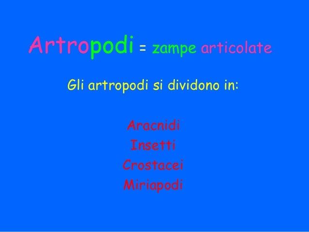 Artropodi = zampe articolate    Gli artropodi si dividono in:             Aracnidi              Insetti             Crosta...