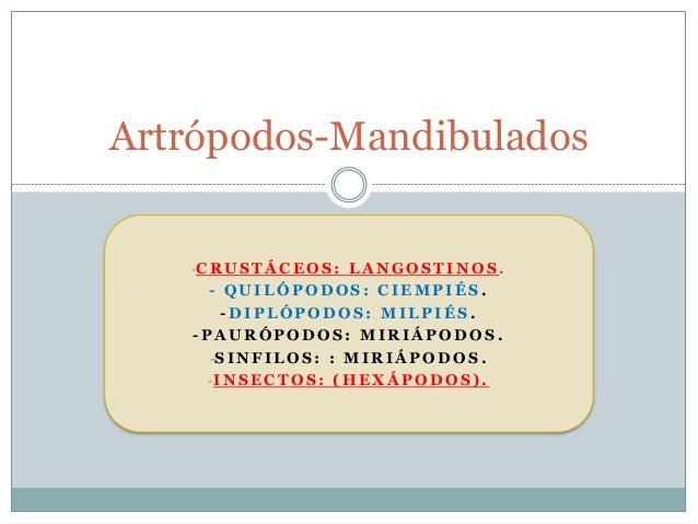 Artrópodos-Mandibulados   -C R U S T Á C E O S : L A N G O S T I N O S .      - QUILÓPODOS: CIEMPIÉS.        -DIPLÓPODOS: ...