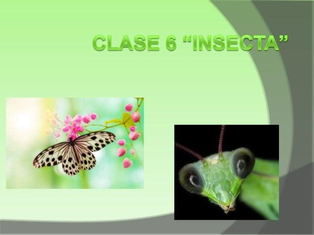 INTRODUCCION Las moscas, saltamontes, chulupis, mariposas, otros pertencen a esta clase alcanzan mas de 900000 especies so...