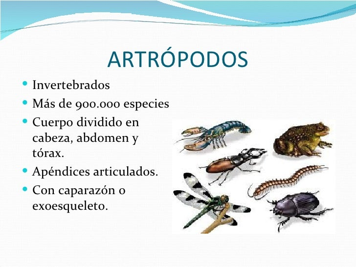 ARTRÓPODOS Invertebrados Más de 900.000 especies Cuerpo dividido en  cabeza, abdomen y  tórax. Apéndices articulados....
