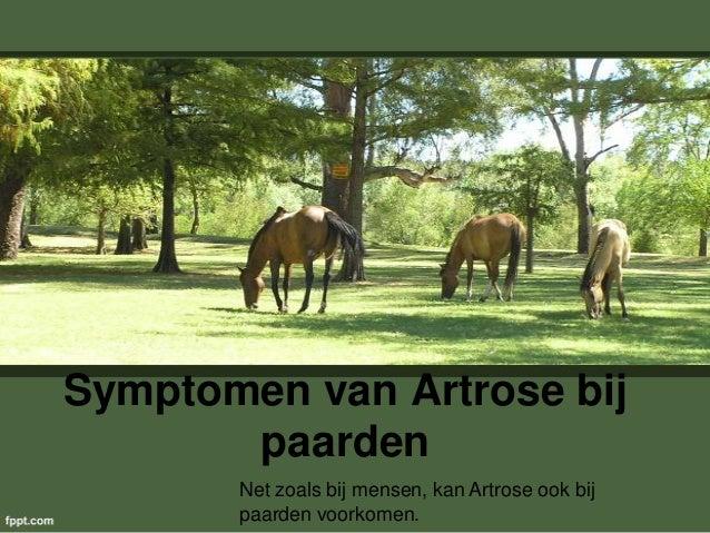 Symptomen van Artrose bij paarden Net zoals bij mensen, kan Artrose ook bij paarden voorkomen.