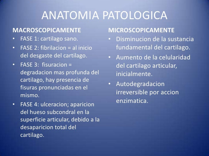 Único Anatomía Y Fisiología De La Osteoartritis Colección - Anatomía ...