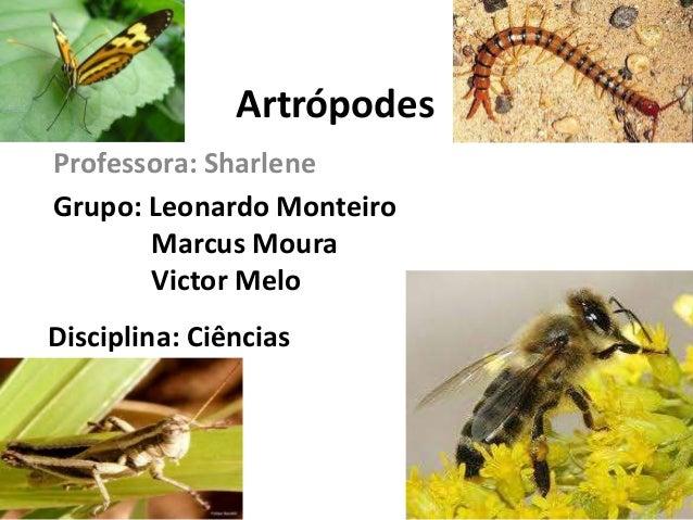 Artrópodes Professora: Sharlene Grupo: Leonardo Monteiro Marcus Moura Victor Melo Disciplina: Ciências