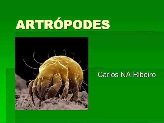 ARTRÓPODES Carlos NA Ribeiro