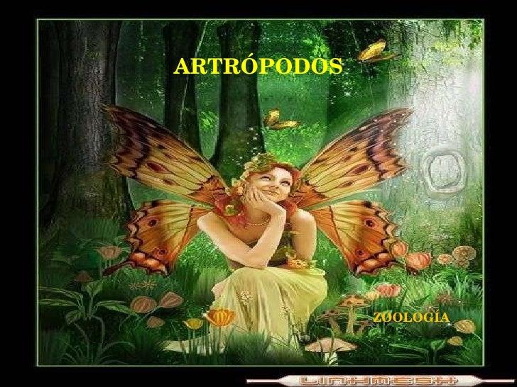 ARTRÓPODOS ZOOLOGÍA