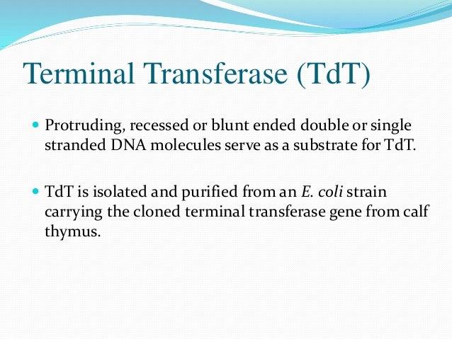 Ligases  Fast and efficient ligation of DNA and RNA.  T4 DNA Ligase  T4 RNA Ligase