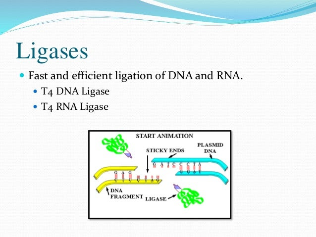 Applications  Cloning of restriction enzyme generated DNA fragments  Cloning of PCR products  Joining of double-strande...