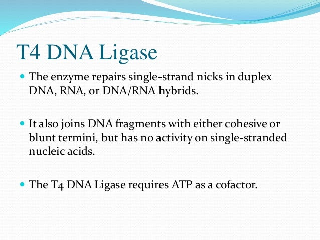 T4 RNA Ligase  T4 RNA Ligase catalyzes the ATP-dependent intra- and intermolecular formation of phosphodiester bonds betw...