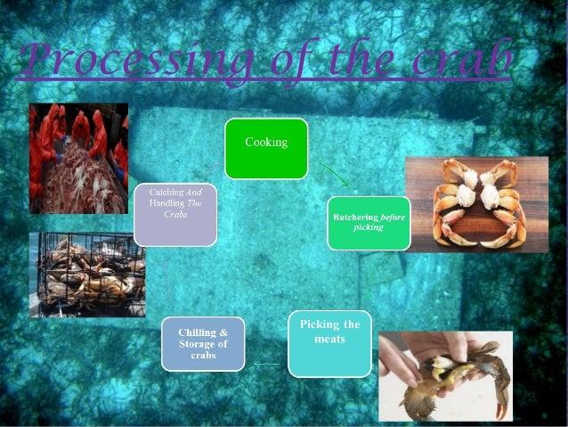 handling of seafood