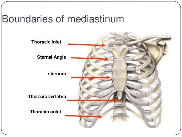 Canine Thyroid Gland Location