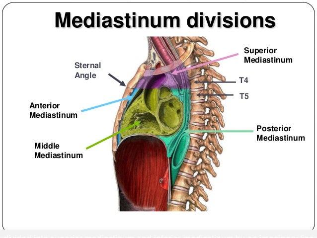 Mediastinal Imaging And Masses