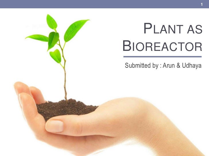 Plant as Bioreactor<br />Submitted by : Arun & Udhaya<br />1<br />