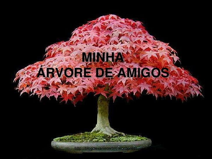MINHAÁRVORE DE AMIGOS<br />http://blogdevariedades.wordpress.com<br />