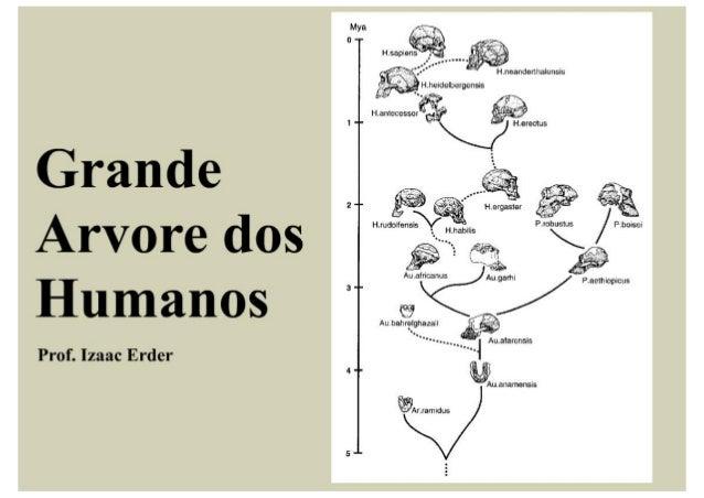 Wa -Tí .  o A* H sapiens _.   __. ... ..      H . neanderfualensis          V' Hmeidalbergensis Hamecessor  ' w* 1 ' V Her...