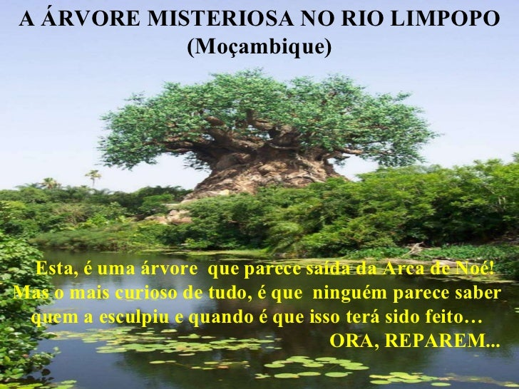 A ÁRVORE MISTERIOSA NO RIO LIMPOPO (Moçambique) Esta, é uma árvore  que parece saída da Arca de Noé!  Mas o mais curioso d...