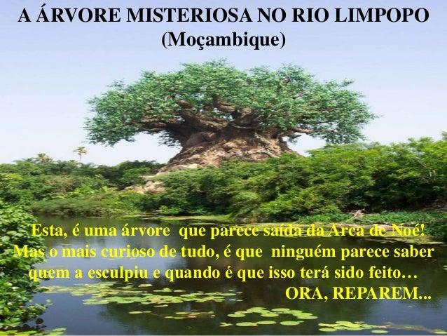 A ÁRVORE MISTERIOSA NO RIO LIMPOPO (Moçambique)  Esta, é uma árvore que parece saída da Arca de Noé! Mas o mais curioso de...